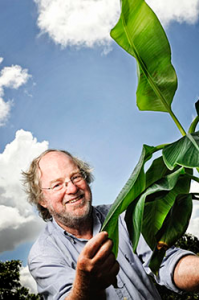 Distinguished Professor James Dale developed provitamin A-enriched bananas for Uganda, soon to be in human clinical trials.