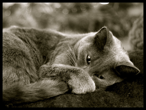 Cat waking up