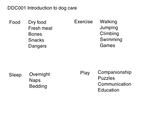 Introduction to dog care