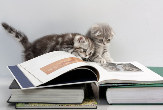 Cats are reading a book by Catunes (CC-BY-NC-SA)