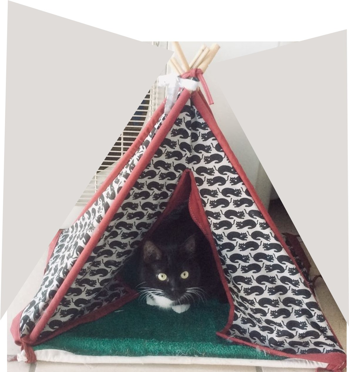 black and white cat in a black and white cat tent
